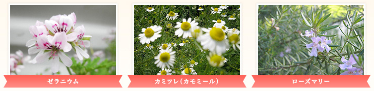 ayanasu_アヤナス
